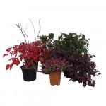 Kit de plantes